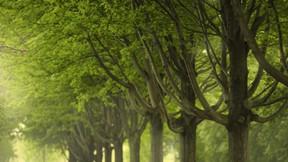 ilkbahar,ağaç