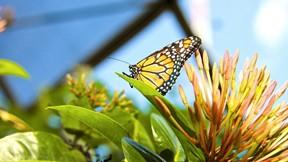 kelebek,yaprak,bitki