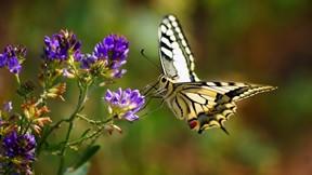 kelebek,çiçek