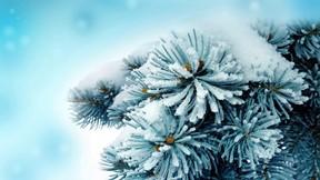 kış,yaprak,kar