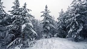 kış,orman,ağaç,kar