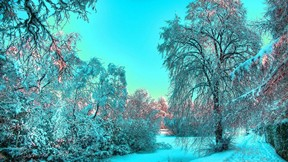 kış,buz,ağaç,gökyüzü