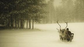 kış,kar,orman,yol,geyik