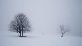 kış,kar,ağaç,kar