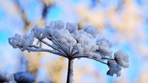 kış,kar,dal