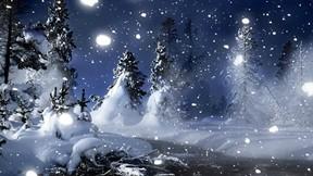 kış,kar,ağaç,gece