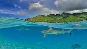 köpek balığı,deniz,ada