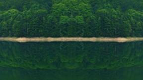 doğa,orman,ağaç,göl,yansıma