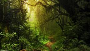 orman,ev,ağaç,dere