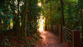 orman,ağaç,yol