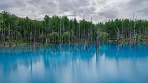 doğa,orman,ağaç,göl,gökyüzü,mavi