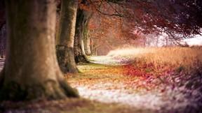 doğa,ağaç
