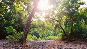 doğa,orman,güneş