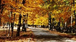 doğa,orman,yol,ağaç,yaprak