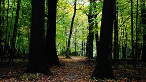 doğa,orman,karanlık,ağaç