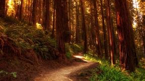 doğa,orman,ağaç,yol