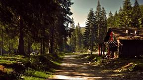 doğa,orman,ağaç,ev,yol