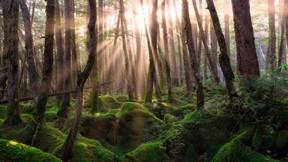 doğa,orman,ağaç,yosun