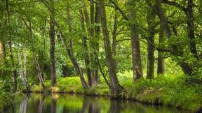 doğa,orman,nehir
