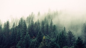 orman,doğa,bulut,ağaç