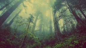 doğa,orman,sis,ağaç