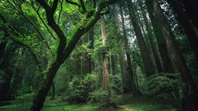 doğa,orman,ağaç