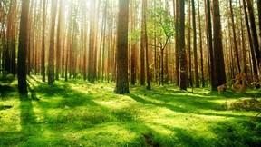 doğa,orman,ağaç,çimen,güneş