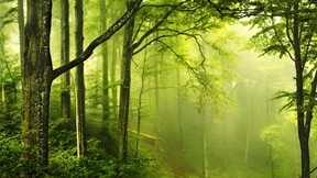 doğa,orman,ağaç,sis