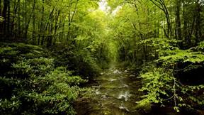 doğa,orman,ağaç,dere