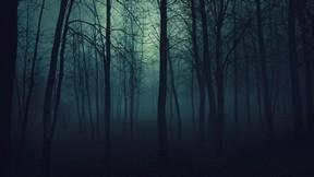 doğa,orman,ağaç,karanlık