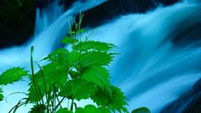 doğa,dere,yaprak