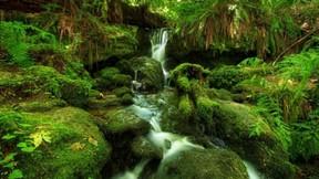 doğa,şelale,yosun