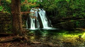 doğa,şelale,orman,ağaç