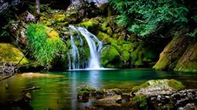 doğa,şelale,orman,ağaç,yosun