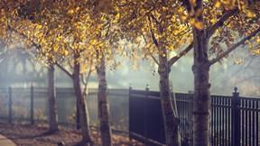 sonbahar,ağaç