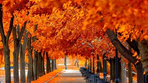 sonbahar,ağaç,kızıl