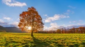 sonbahar,ağaç,güneş,doğa