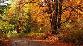 sonbahar,ağaç,orman,yol