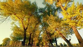 sonbahar,ağaç,ev