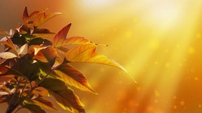sonbahar,yaprak,güneş