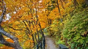 sonbahar,yaprak,yol,ağaç