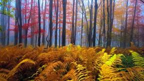 sonbahar,yaprak,orman,ağaç