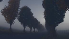 sonbahar,sis,yol,ağaç