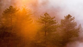 doğa,orman,yol