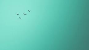 sonbahar,kuş,gökyüzü