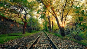 sonbahar,ray,ağaç,orman,doğa