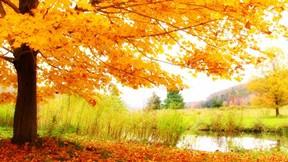 sonbahar,ağaç,yaprak,göl