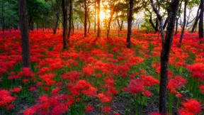sonbahar,gül,orman,güneş