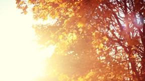 sonbahar,güneş,ağaç