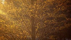 sonbahar,yaprak,ağaç